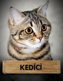 Kedici : Bir Kedi Gördüm Sanki