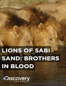 Lions Of Sabi Sand: Brothers In Blood