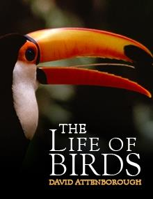 The Life of Birds: Meat-Eaters