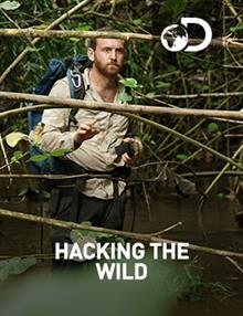 Hacking The Wild - The Black Bayou